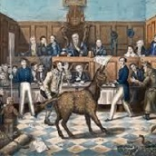 Animals on Trial
